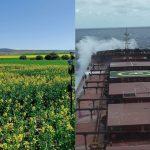 Es geht immer noch verrückter! Europa importiert Raps aus Australien für Biodiesel um Emissionsziele zu erreichen! Australian canola goes to Europe to make biodiesel to help the European Union meet its emissions targets