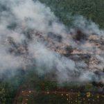 Nicht nur der Amazonas brennt, auch Borneo brennt aus Gier und Indigene werden wegen Bekämpfung der Entwaldung verhaftet! Borneo is burning - How the world's demand for palm oil is driving deforestation in Indonesia
