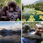 Nicht einmal auf Schutzgebiete, wo die Gorillas leben, wird Rücksicht genommen - Uganda unterzeichnet mit Ölriese Total das ostafrikanische Rohölpipeline-Projekt! - Oil versus gorillas - Uganda and Total sign deal for construction of crude oil pipeline project