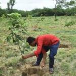 Der Mann, der Bäume pflanzte! 10.000 Bäume auf unfruchtbarem Land in Indien! Inspired by Manjhi, man plants 10,000 trees on barren land