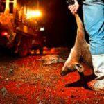 Horror! Zwei Millionen Kängurus werden jedes Jahr geschlachtet, um Fußballschuhe herzustellen-Kangaroos Are Being Killed So That Nike and Adidas Can Use Their Skin to Make Sneakers