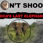 Trotz Massensterben von Elefanten - Botswana startet Jagd-Saison auf 287 Elefanten - Botswana's Trophy Hunts of Rare Animals-Licences have been issued to kill 287 elephants