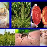 Die Natur schlägt immer zurück und sie tut es bereits! Farmer verlieren den Kampf gegen Glyphosat-Resistenz und Menschen werden krank!