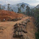 Abholzung und Pandemievirus, ein Hund, der sich in den Schwanz beißt- Abholzung führt zu mehr Infektionskrankheiten beim Menschen -Deforestation is leading to more infectious diseases in humans