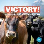 Endlich! Neuseeland verbietet den Export lebender Tiere- New Zealand to ban live animal exports