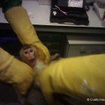 Das Leiden der Tiere für Tierversuche im Todeslabor in Spanien -Spain investigates extreme animal cruelty at testing lab Vivotecnia