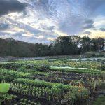 Nicht industrielle Landwirtschaft beenden den Hunger sondern ökologische - Recent studies show that agroecology can deliver for food security, nutrition and biodiversity