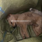 """Ein neuer Wahnsinn- nach lebende Tiere als Schlüsselanhänger, jetzt lebende Tiere in China als """"Überraschungsbox"""" - China's Dark New 'Blind Box' Craze: Live Pets- puppies die inside"""