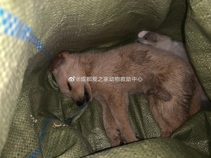 Lebende tiere schlüsselanhänger Skandal in