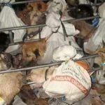 Grausamkeit kennt keine Grenzen! Der grausame Handel mit Hundefleisch - Cruelty knows no borders. The Cruelty of the Dog Meat Trade