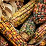 Staatliche Erpressung durch EU zugunsten BayerMonsanto! 80 Organisationen lehnen eine Einmischung in Mexikos Ausstieg aus Glyphosat und gentechnisch verändertem Mais ab-80 Groups Blast US Interference in Mexico's Phaseout of Glyphosate and GM Corn