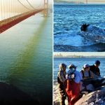 PCB und DDT! Der Überlebenskampf der Wale in Kalifornien- The culprits PCB and DDT?- 100s of Dead Whales Are Washing up on the US West Coast