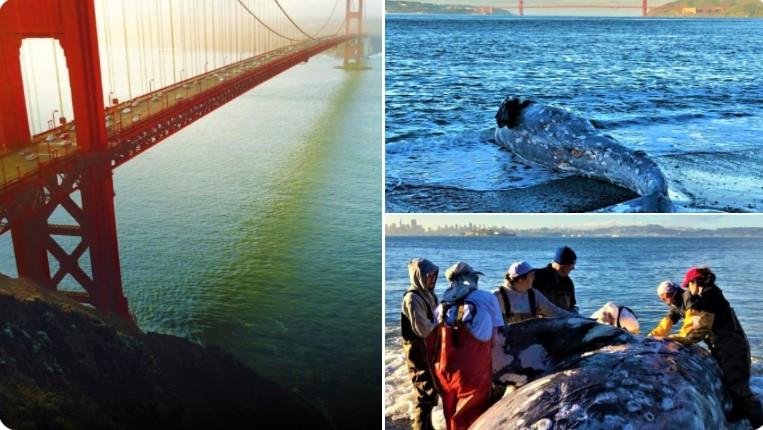 PCB und DDT! Der Überlebenskampf der Wale in Kalifornien