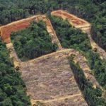 Bioenergie: Die hässliche Wahrheit! Aus für Palmöl und Soja in Biokraftstoffen in Belgien -Bioenergy: The Ugly Truth! Belgium Bans Biofuels Made From Palm Oil, Soy