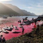 Waljagd auf den Färöern färbt das Wasser wieder rot vom Blut- grausam und brutal- Whale's head impaled on spike as brutal slaughter returns -Stop the grindadrap in the Faroe Islands