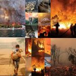 Die Welt steht in Flammen- wir fahren die Sache gemeinsam vor die Wand!  The world is going up in flames! Wildfires have erupted across the globe, scorching places that rarely burned before