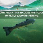 Nein zu Lachsfarmen- Argentinien verbietet als erstes Land der Welt die Lachszucht- VICTORY! No to salmon farming! ARGENTINA BECOMES FIRST COUNTRY TO REJECT SALMON FARMING