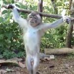"""Es sind die abscheulichsten Verbrechen - Affenbabys werden online missbraucht, gefoltert und umgebracht, weil es ein """"Kunde"""" so wünscht- 'Monkey Haters' Are Paying to Have Baby Monkeys Tortured and Killed on Camera"""