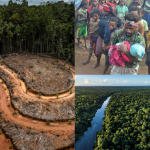 Der weltweite Durst nach Palmöl ist dabei, Asiens größten verbliebenen Regenwald zu zerstören- The World's Thirst for Palm Oil-Palm oil versus paradise in Papua- the forgotten people