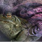 """Psychedelische Wüstenkröte bereits gefährdet! Kennen Sie  """"Bufo alvarius""""? Touristen rauchen Krötengift in Mexikos Hipster-Stadt Tulum! Toads in danger! Tourists Are Now Smoking Toad Venom in Mexico's Hipster Town Tulum"""
