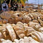 Wenn wir denken, schlimmer geht es nicht! Grausiger Fund- Statt Elefantenelfenbein wildert China bedrohte Riesenmuscheln - Inside the Global Underground Wildlife Trafficking Market-Criminals are stealing giant clams and carving them like ivory